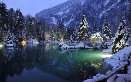 Blausee Lake, Switzerland - lake, trees, snow, lights, nature, mountain, forest, night