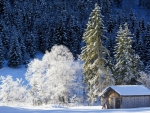 The Winter's Beauty in Bavaria