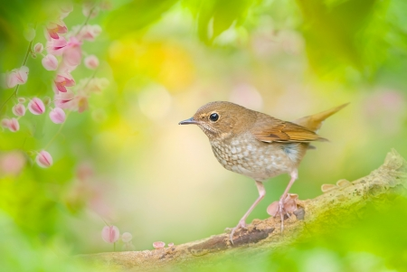 A Nightngale - a bird, bokeh, branch, a nightingale, Nightingale-whistler