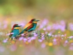 Colorful Kingfishers
