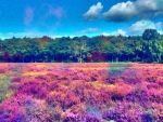 Colorful Field Near the Forest