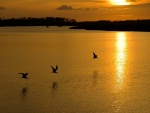 Birds on a lake at Sunset