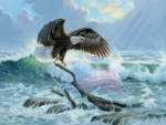 Eagle at the Sea