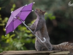 Squirrel hates the hurricane Doris as well