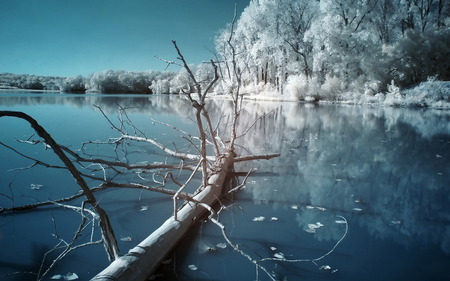 Winter Scenery - nature, ice, winter, snow