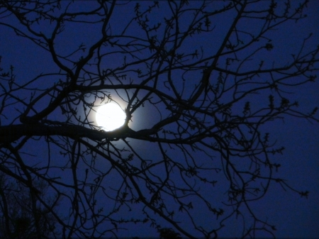 Resting Moon - Moon, Space, Sky, Tree, Photography