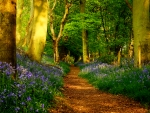 Path in spring forest