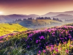 Summer on the flowering Mountain