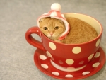 A cup of kitten