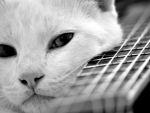 Cat and guitar