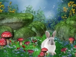 Bunny and Toadstools