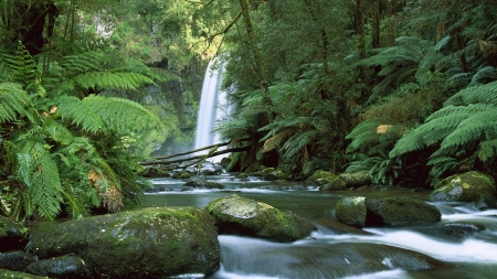 Australia10 - cool, waterfall, forest, river, nature, fun
