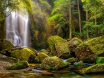 Exotic forest waterfall