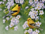 Goldfinches in Spring