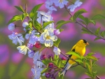 Goldfinch of Spring Blossoms