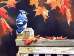 Blue Jay with Autumn Leaves