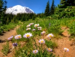 Wildflowers in Mountain