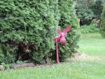 Red Moose Between The Cedars