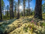 Sunny Forest Landscape