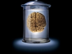 brain in glass