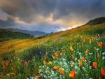 Mountain meadow in spring
