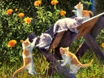 Kittens in the Country F