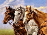 Three of a Kind - Horses F