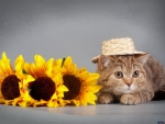 Funny Cat and Sunflowers
