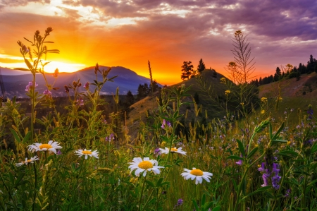 Mountain sunset - sunset, meadow, rocks, summer, mountain, wildflowers, grass, beautiful, amazing, fiery, pretty, sky, spring