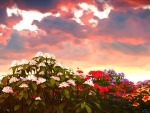 Beautiful Flowers under the Evening Sky