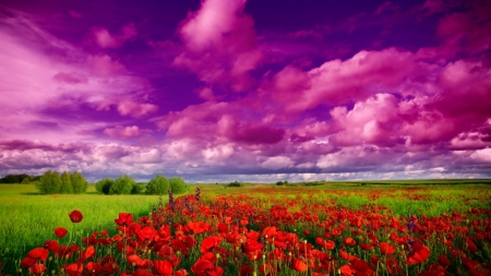 Flower Field - flowers, nature, sky, field