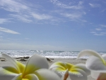 Plumeria Laying on a Beach