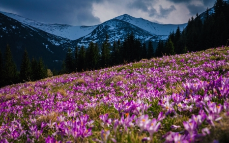Mountains, spring - flowers, mountains, spring, nature