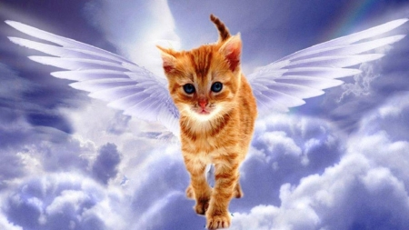 Angel Cat - cat, angel, wings, sky, painting, art, fantasy