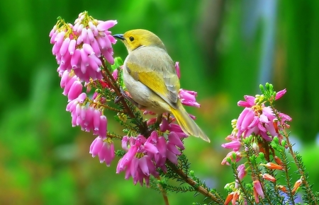 Sweet little Bird - cute, Bird, Flower, Animal