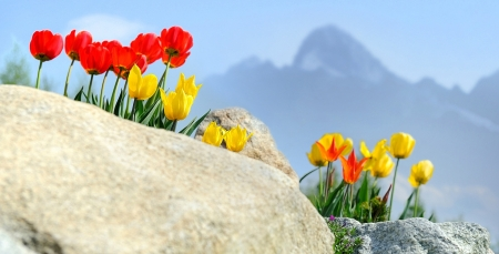Spring in Tatra Mountains, Slovakia - tulips, landscape, blossoms, rock, peak