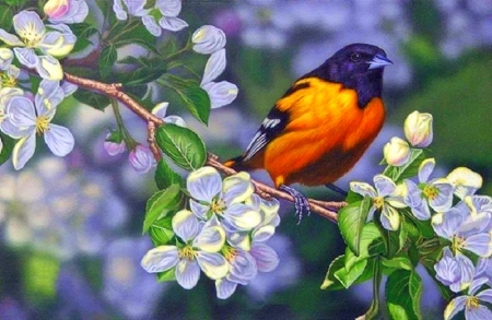 Oriole and Blossoms - animals, cherry blossom, love four seasons, nature, paintings, flowers, bird, garden, spring