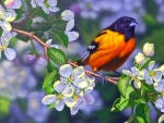 Oriole and Blossoms