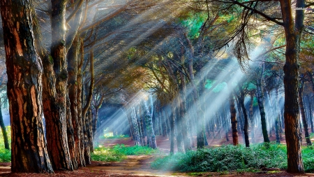 Streaming light - light, trees, beautiful, painting, art, nature, forest, path