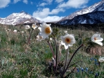Spring Flowers in Tatra Mountains, Poland