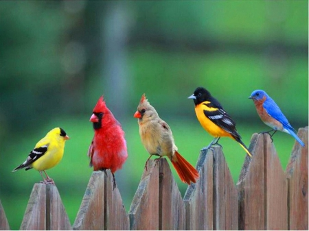 Songbirds - bluebird, fence, cardinals, goldfinch, artwork, painting
