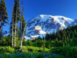 Mount Rainier,USA
