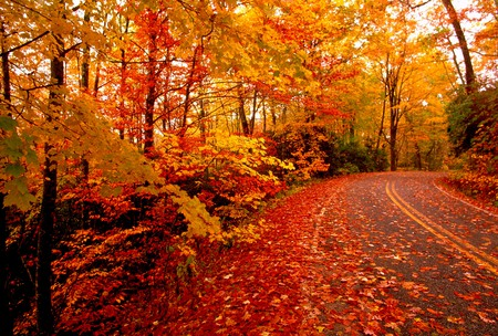 Fallen Leaves - leaves, trees, road, orange, red, gold, autumn