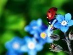 Ladybug on Blue Flowers