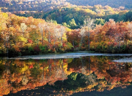 Autumn Reflection - lake, japanese, autumn, scenery, forest, nature, reflection, japan
