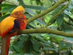 Colorful Tropical Bird