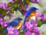Bluebirds & Spring Blossoms