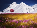 Wildflowers and Snowcovered Mountains