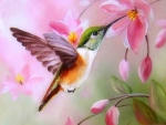 Softly Hummingbird
