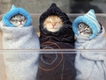 3 Kitties Ready For Bed